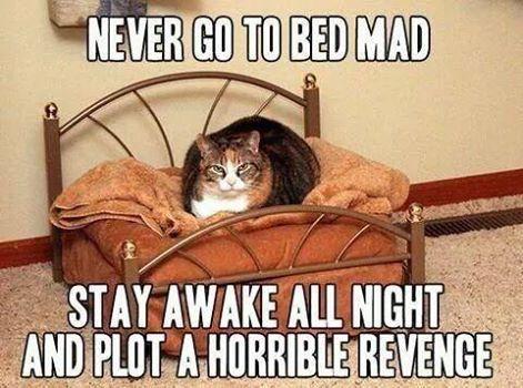 Mad Cat.jpg