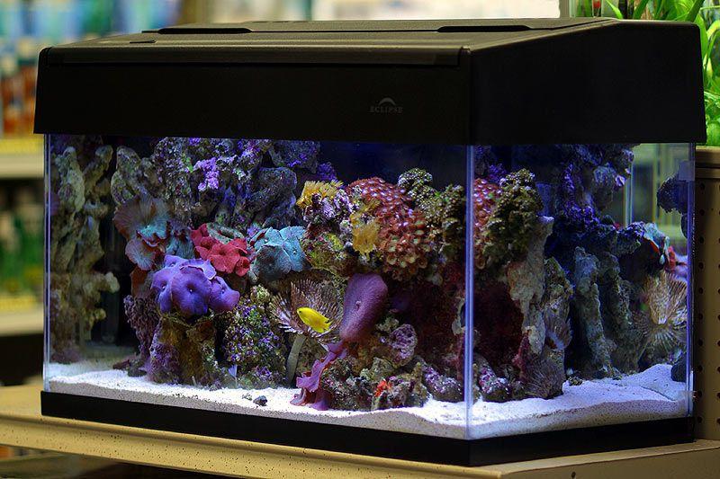 mini-reef-aquarium-nano.jpg