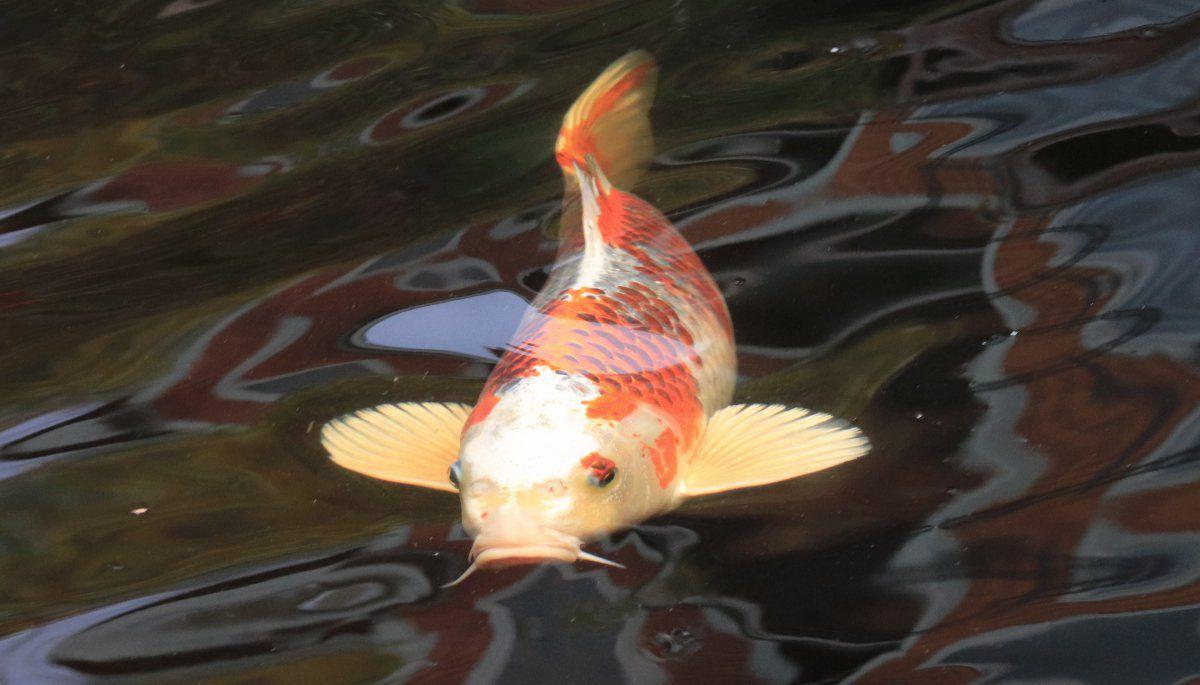 more fall fish 04.jpg