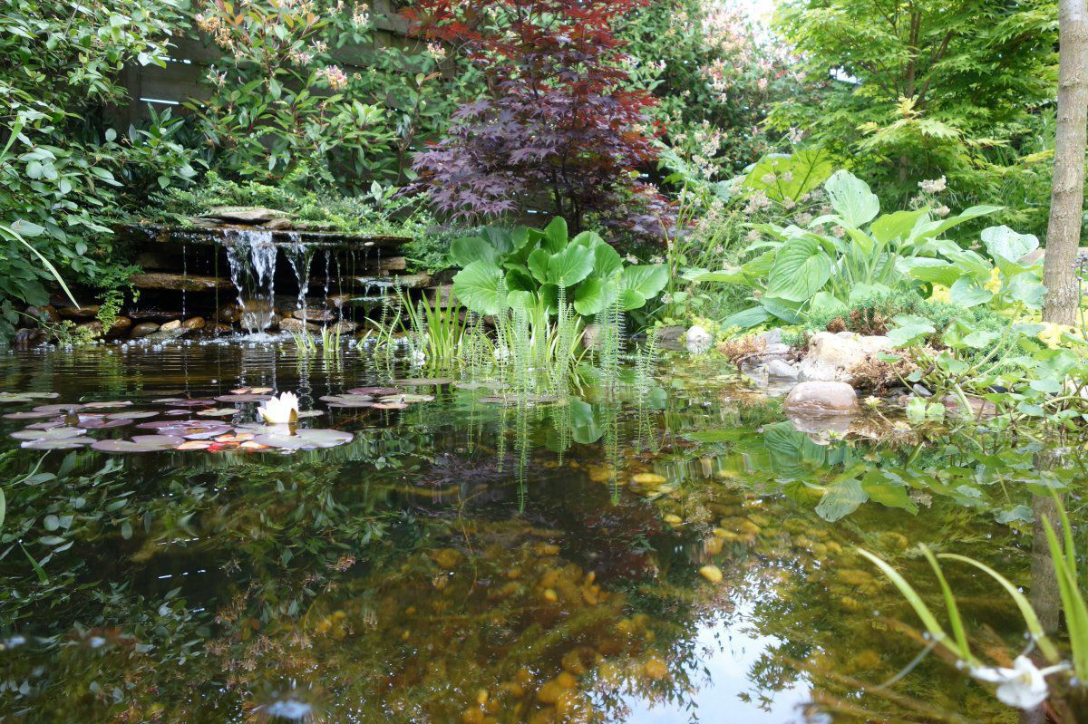 My natural pond by Francois43.jpg
