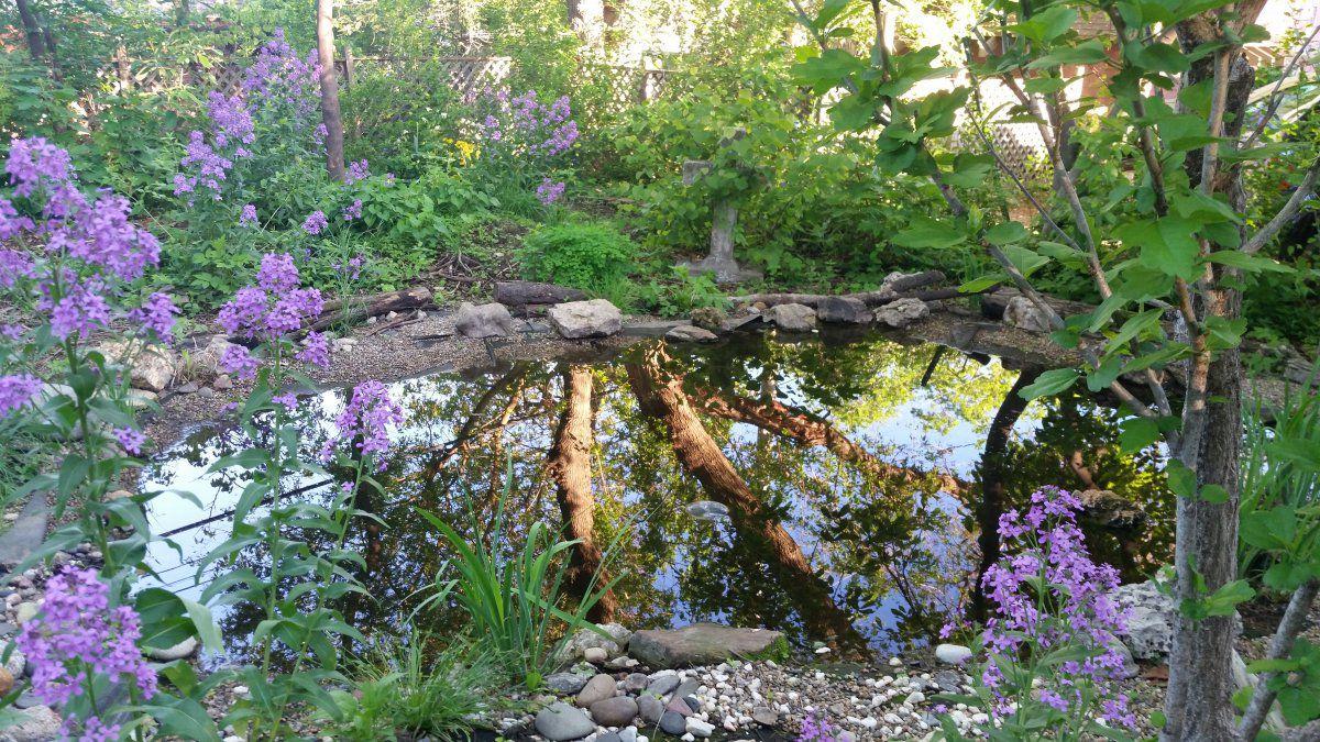 my pond.jpg