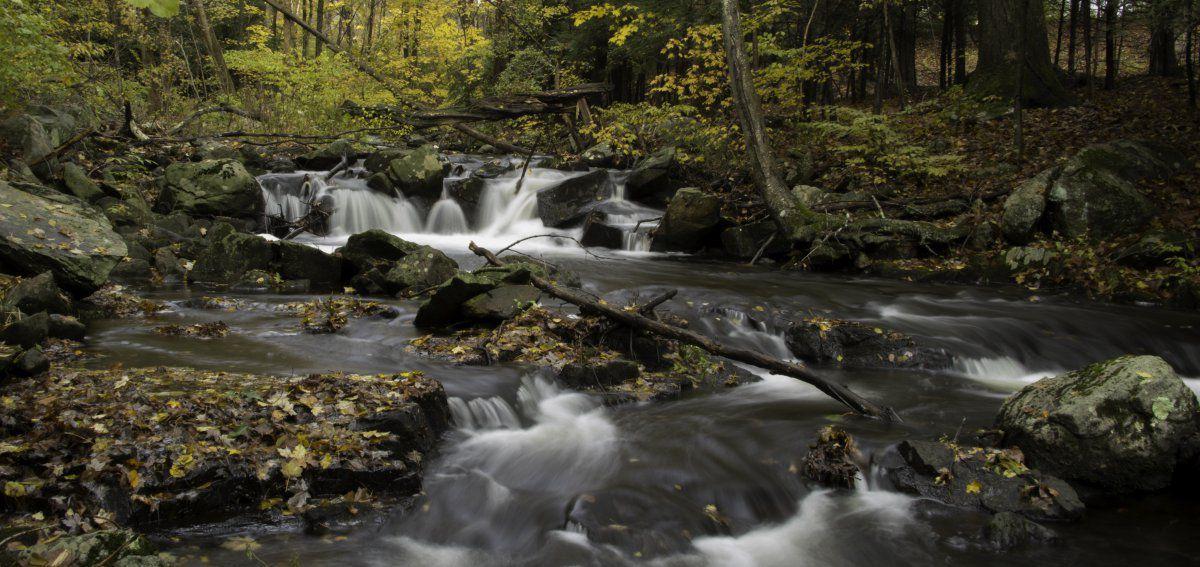 Naugatuck State Forest-1-12.JPG