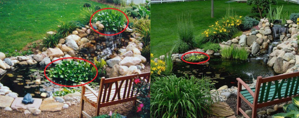 plants - hyacinths 2005 and 2015.jpg