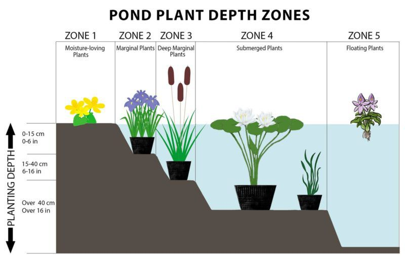 Pond-Plant-Depth-Zones.jpg