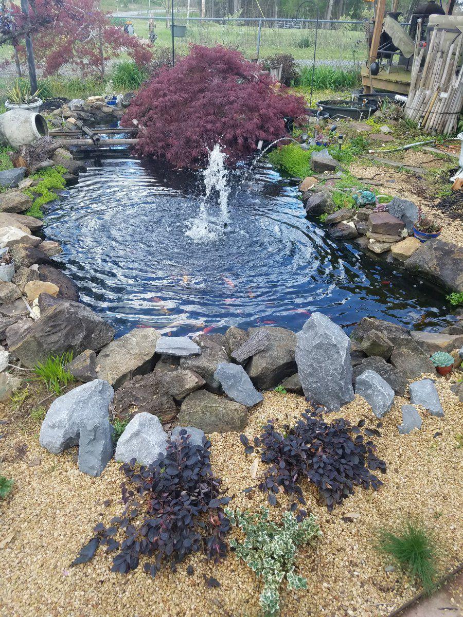 pond spring 2017.jpg