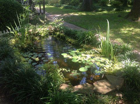 Pond with grass.jpg