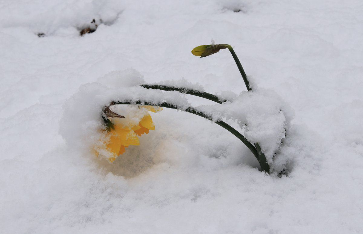 snow day 16.jpg