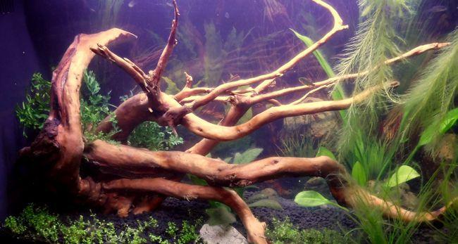 spiderwood.jpg
