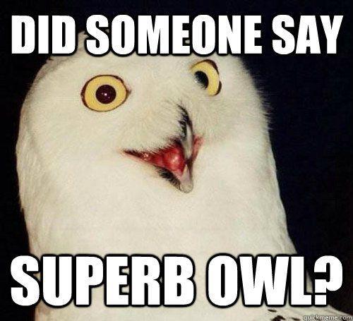 superb owl.jpg