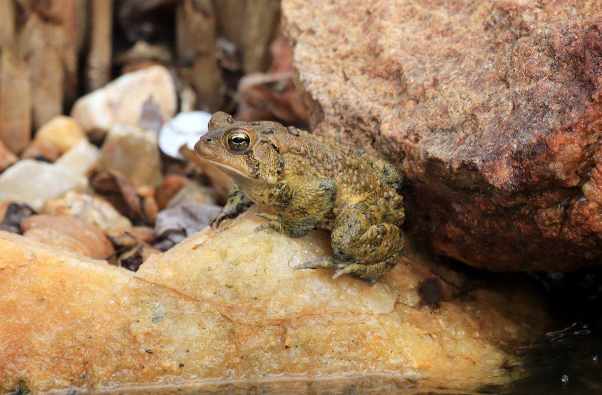 toads begin 03.jpg