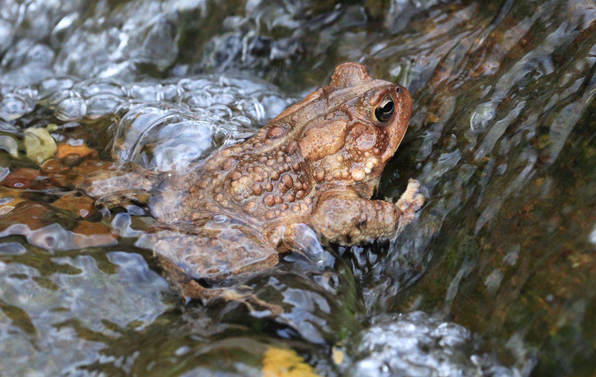toads begin 04.jpg