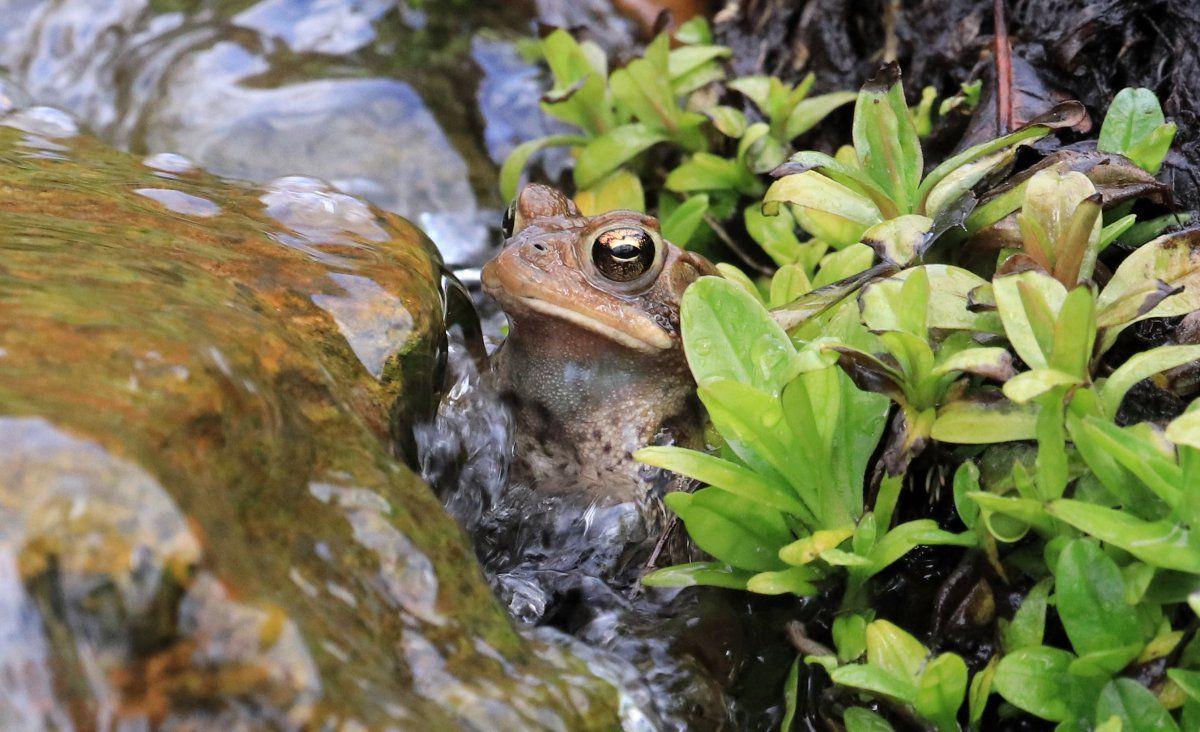 toads begin 05.jpg
