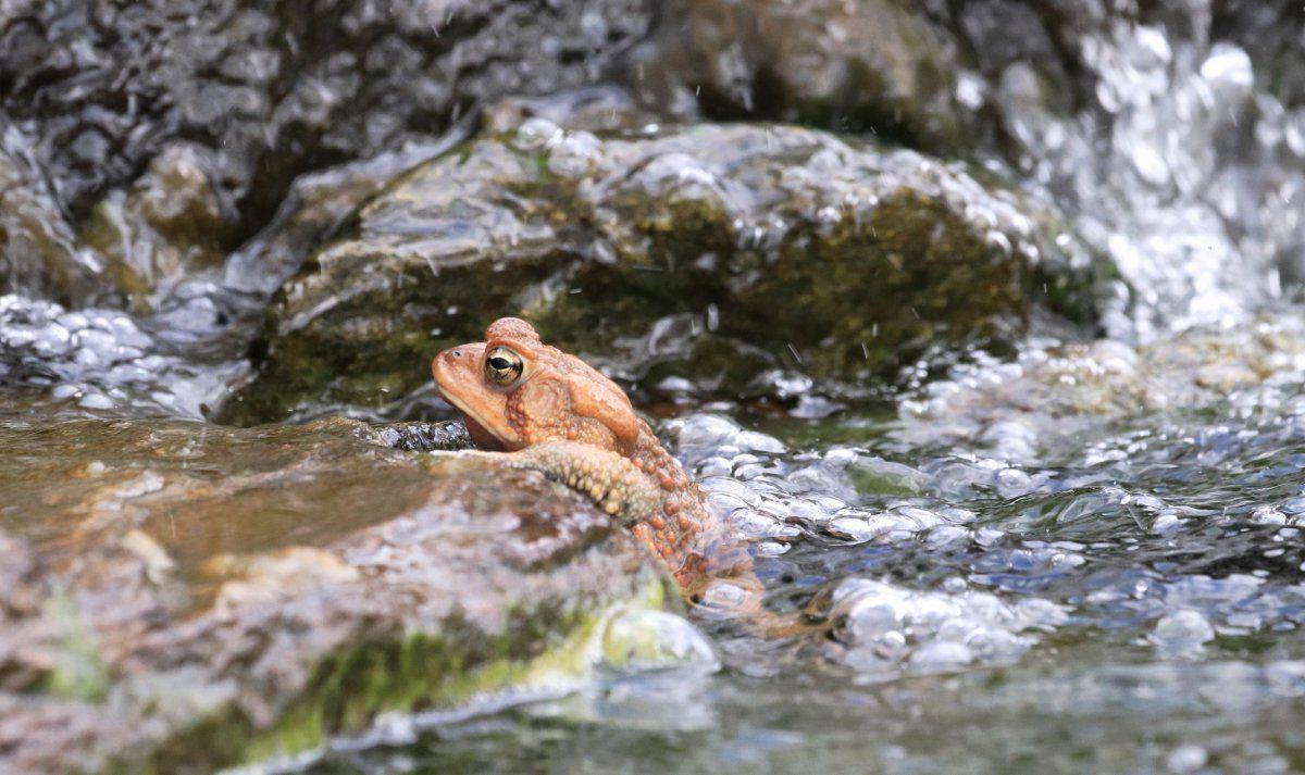 toads begin 06.jpg