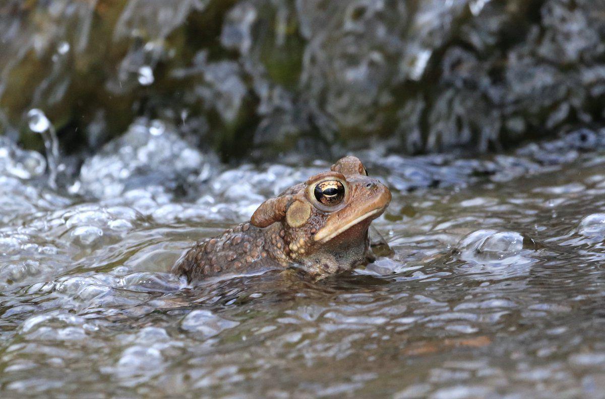 toads begin 07.jpg