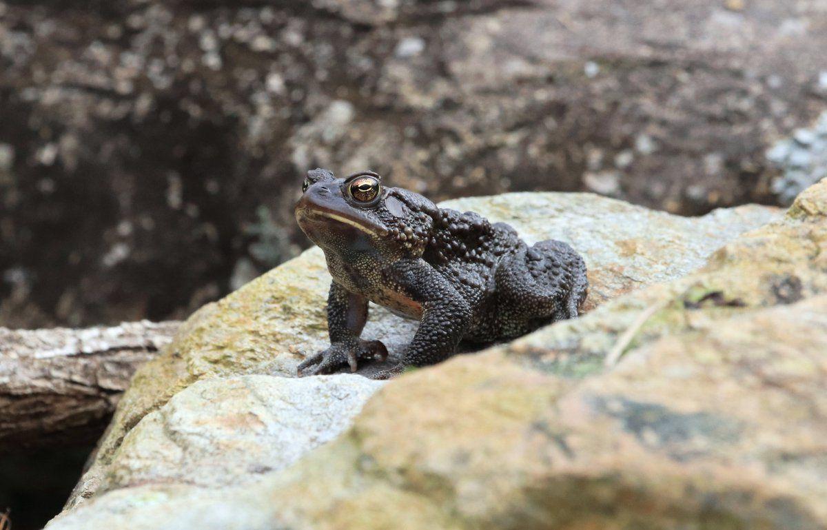 toads begin 08.jpg