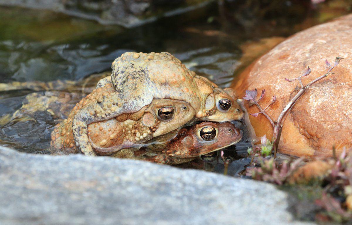 toads day 2 02.JPG