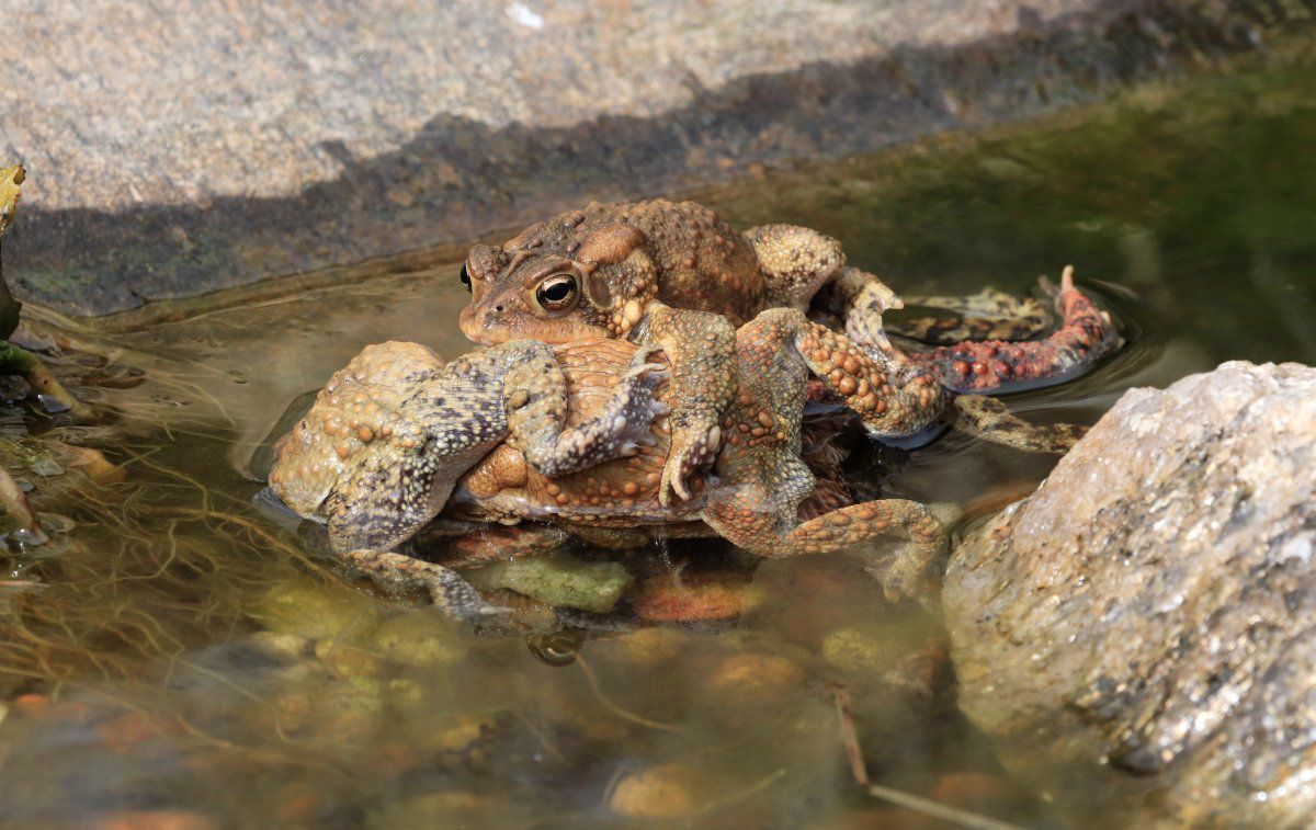 toads day 2 04.JPG