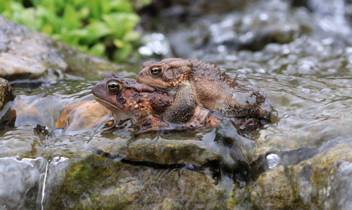 toads day 2 08.JPG