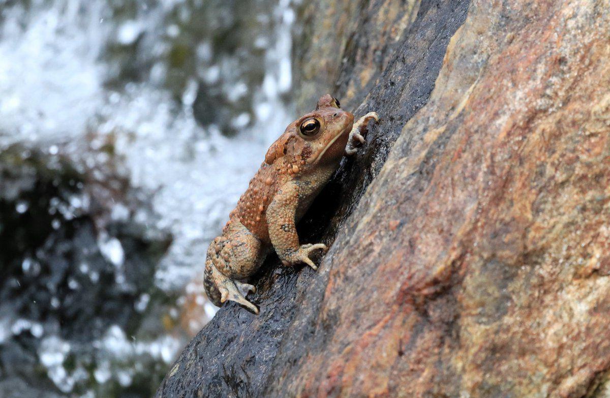 toads day 2 12.JPG