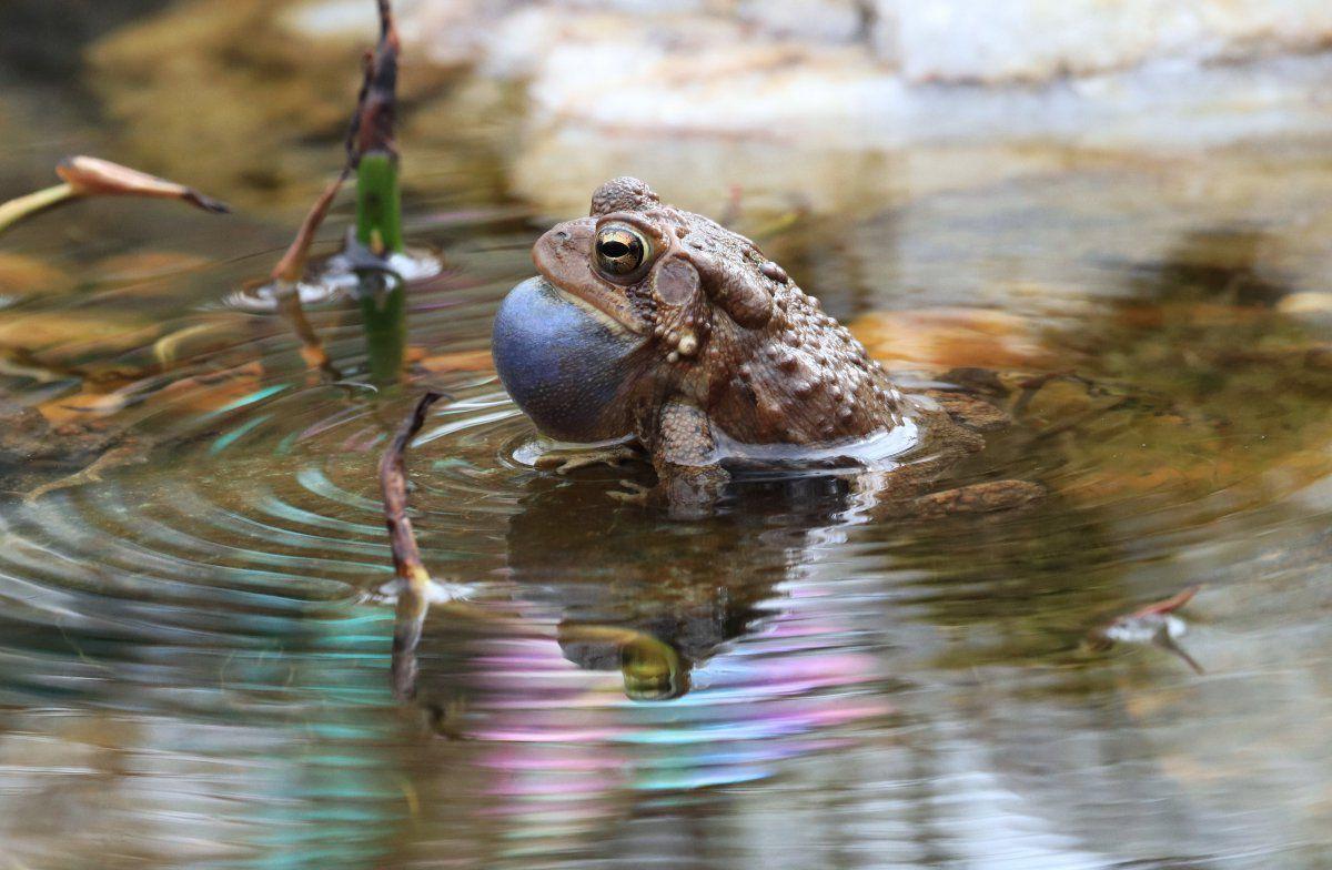 toads day 2 13.JPG