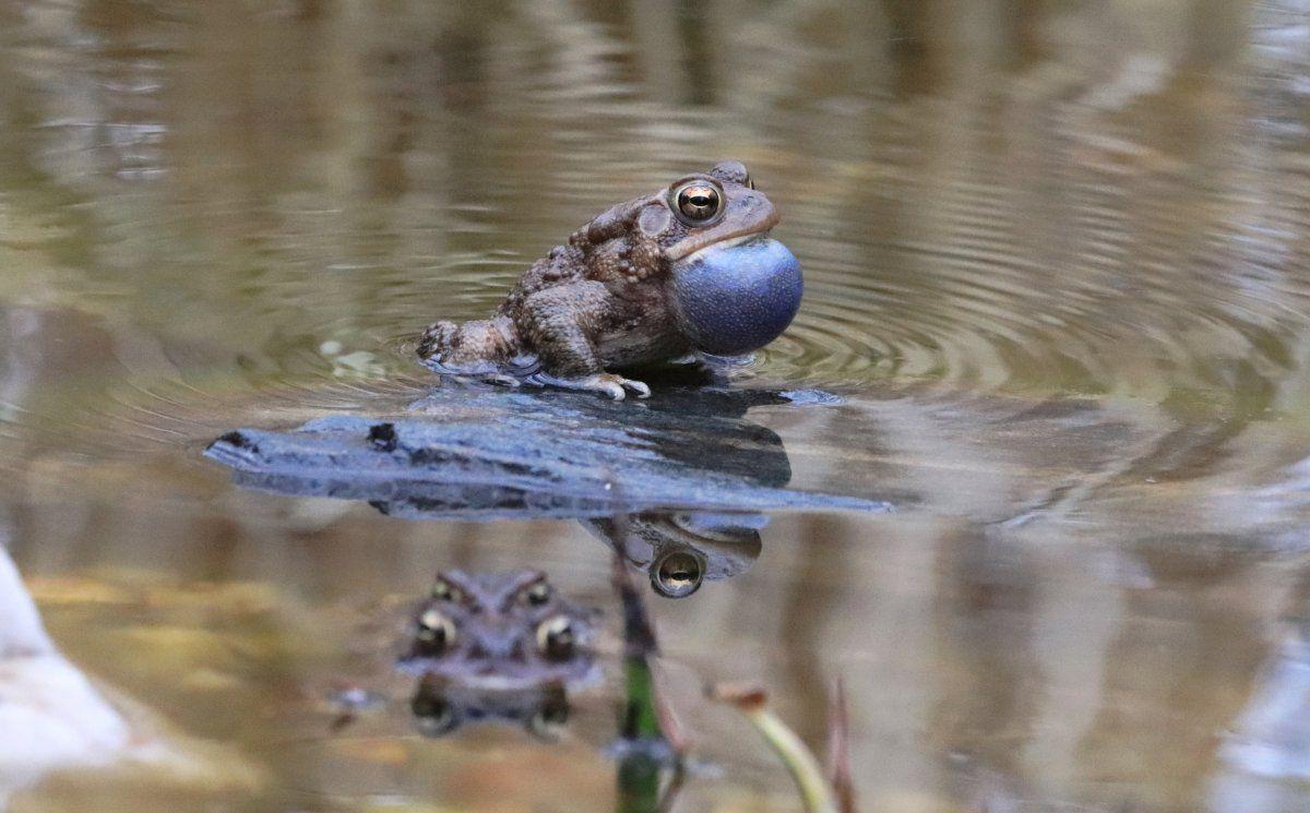toads day 2 19.JPG