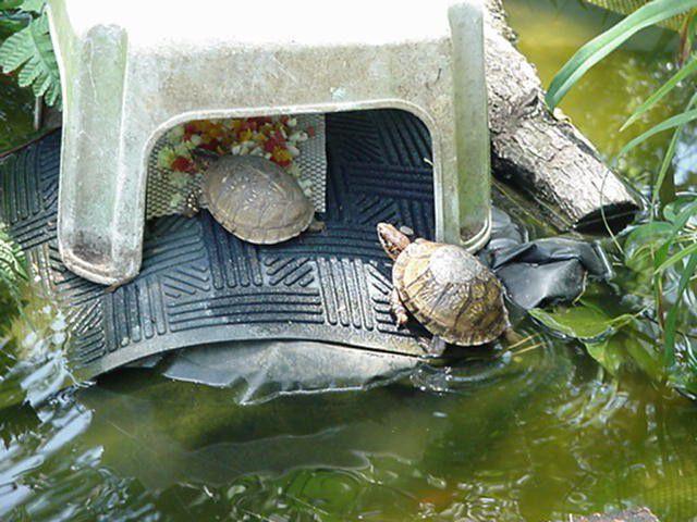 Turtle mat.jpg