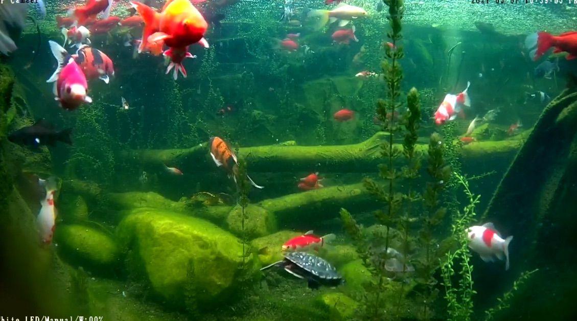 underwater log shot.jpg
