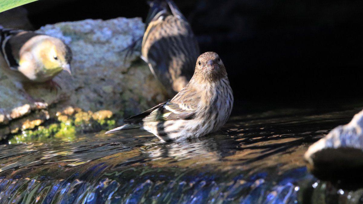 waterfall birds 03.jpg