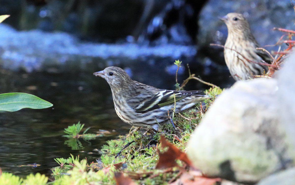 waterfall birds 04.jpg