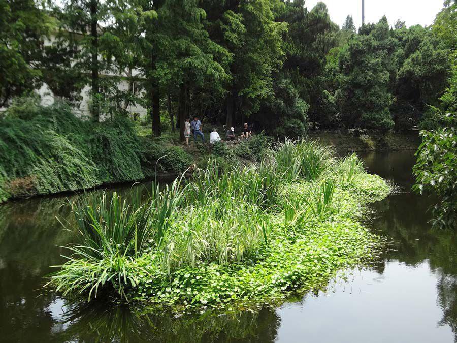 Ye-Garden-plant-island9.jpg