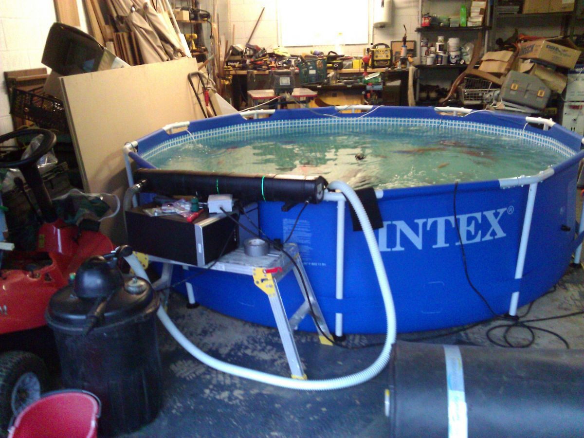 Intex temporary pool in my garage garden pond forums for Koi intex pool