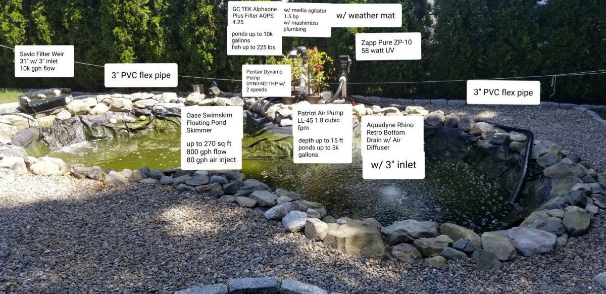 Green pond garden pond forums for Koi pond forum