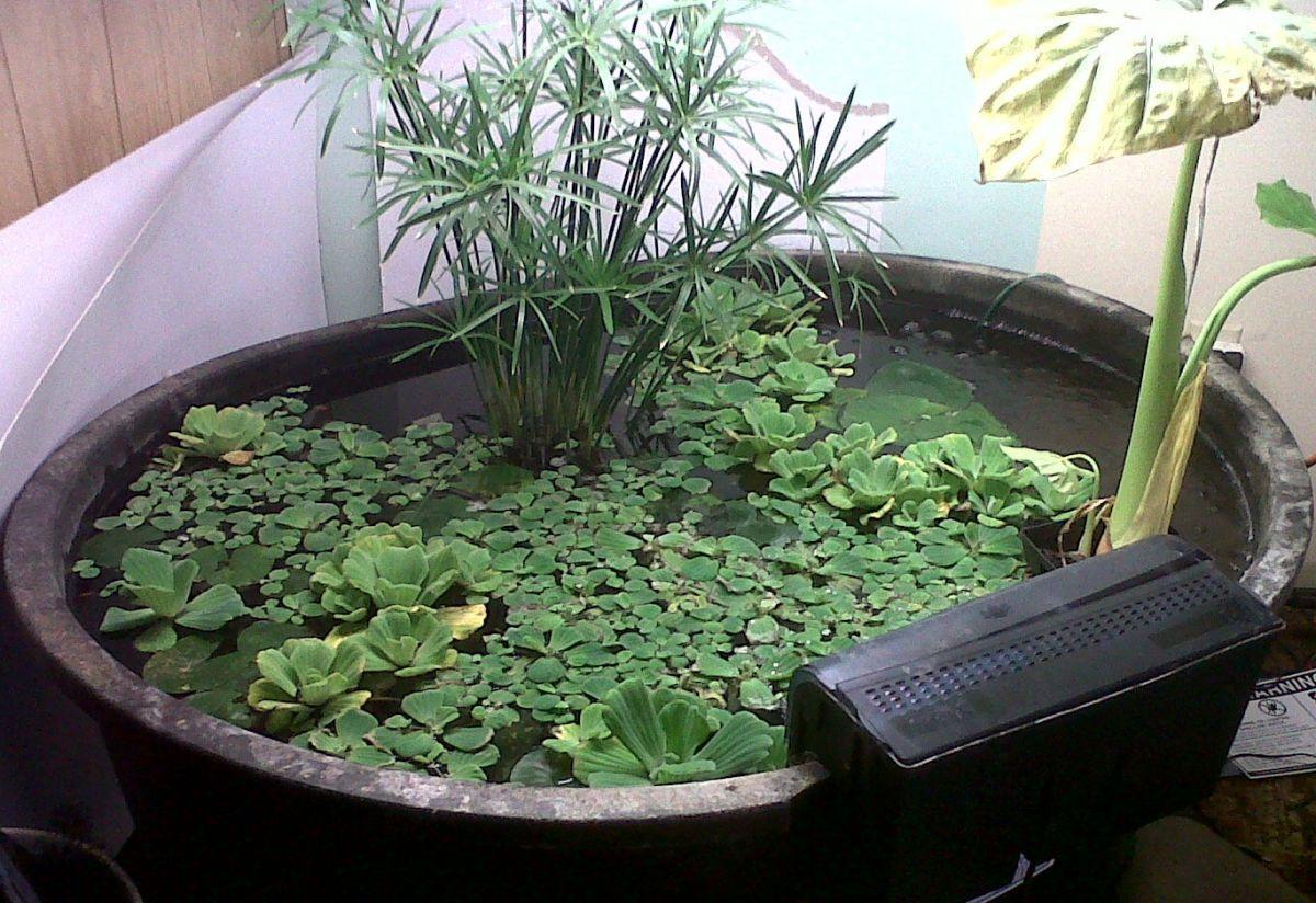 Koi tub garden pond forums for Koi pond forum
