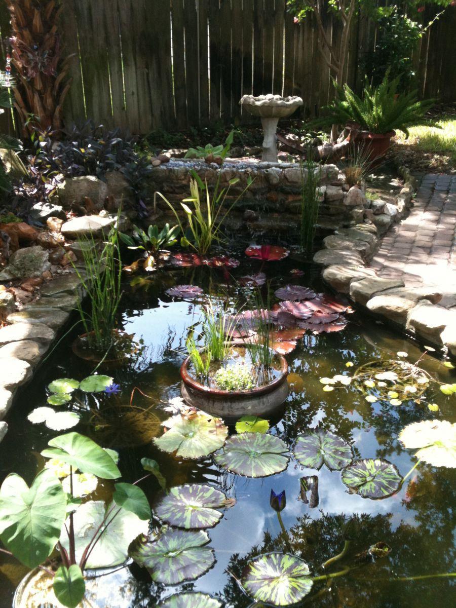 My new bog filter setup garden pond forums for Outdoor fish pond setup